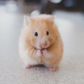 De beestigste cadeautjes voor animal lovers