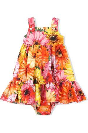 Dolce & Gabbana Gerbera-daisy print poplin dress